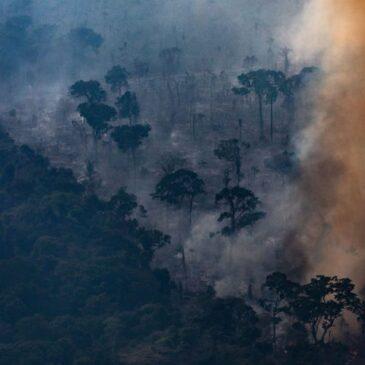 """""""Wir führen einen totalen Krieg gegen die Natur …"""