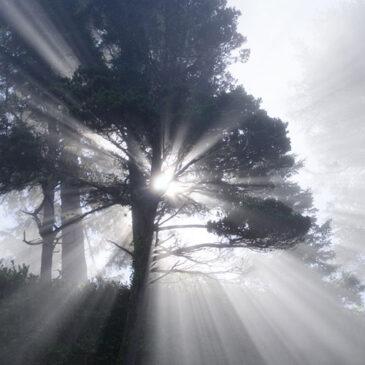 Die 7 Tugenden und ihre Umwandlung